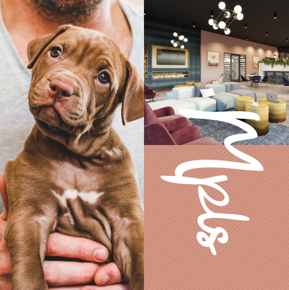 a puppy, the lobby, and a MPLS Graphic
